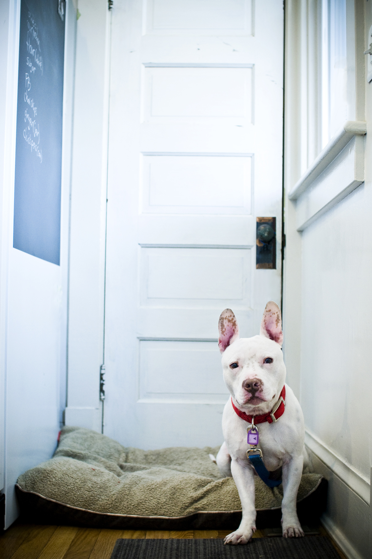Dog « Love and a Six-Foot Leash