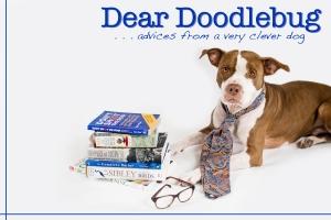 Dear Doodlebug
