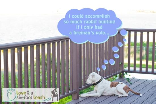 15 rabbit hunting